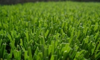 Jupiter Synthetic Turf Grass Installation