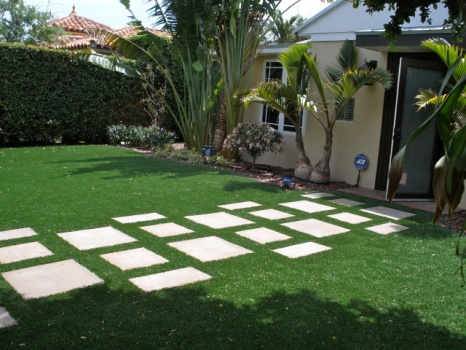 Carpet Grass Florida