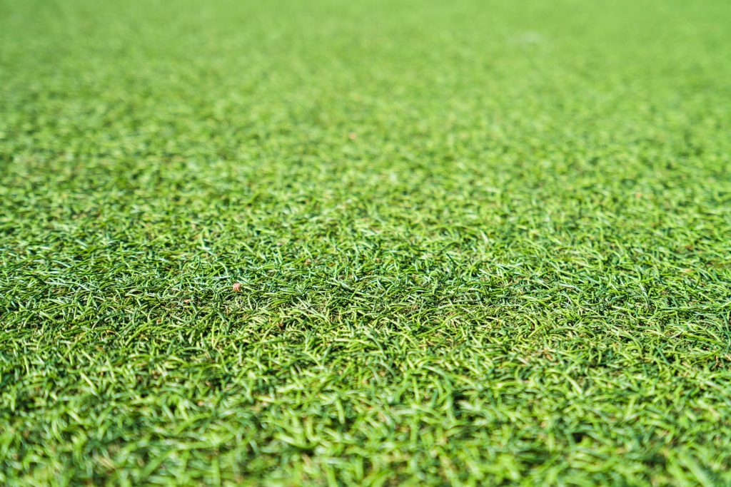 where is the best plastic grass florida?
