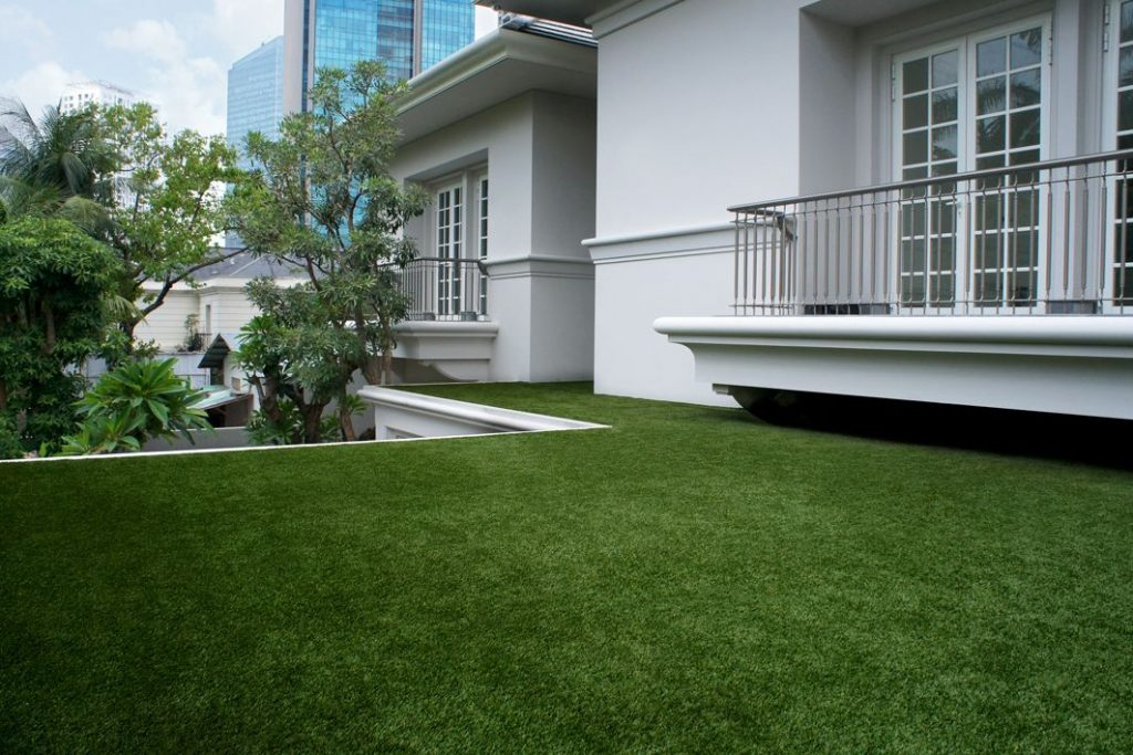 Where to find Low Maintenance Grass Florida?